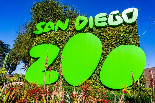 Is San Diego the Perfect Place for a Summer Vacation in San Diego, Ca